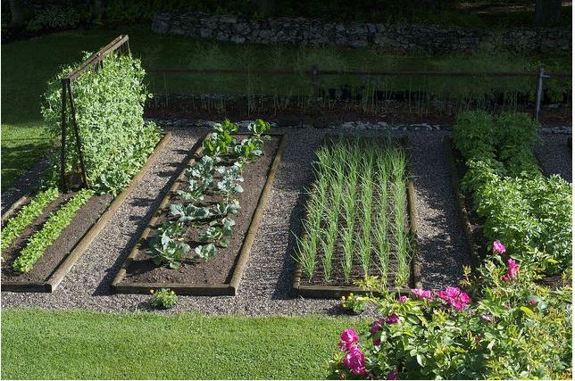 Vegetable Gardens For Beginners