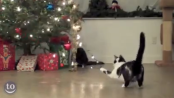 Cats vs. Christmas Trees