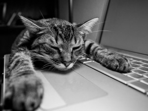 Sleepy at Work
