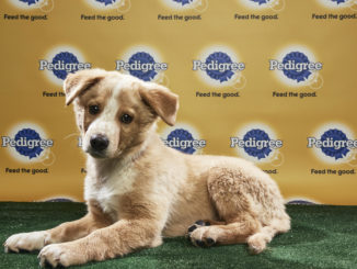 puppy bowl players